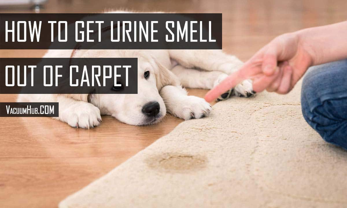 How To Get Urine Smell Out Of Carpet? - Working & Easy Methods