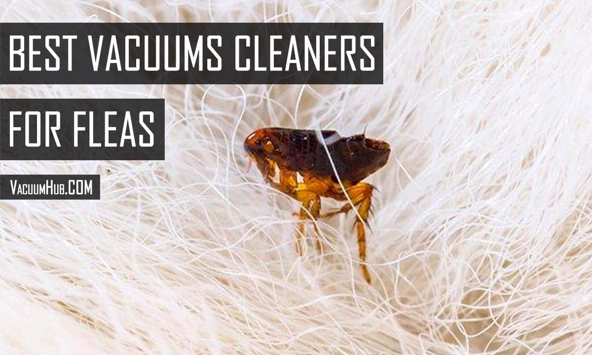 Best Vacuum For Fleas Control Reviews