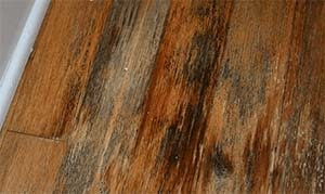 how to remove stain from hardwood floors without sanding